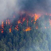 森林防火无线监控方案